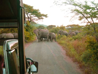 1St Queens Dragoon Guards Tour To South Africa Elephants