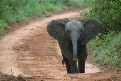 Baby Elephant In South Africa
